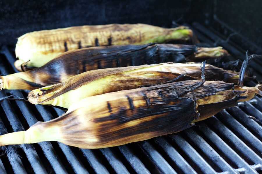 Browned fresh grilled corn on the cob in the husk