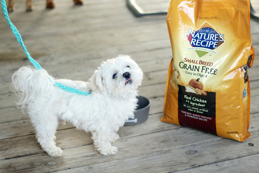 A picture of a small white dog tied to a rope dog leash next to a bag of dog food