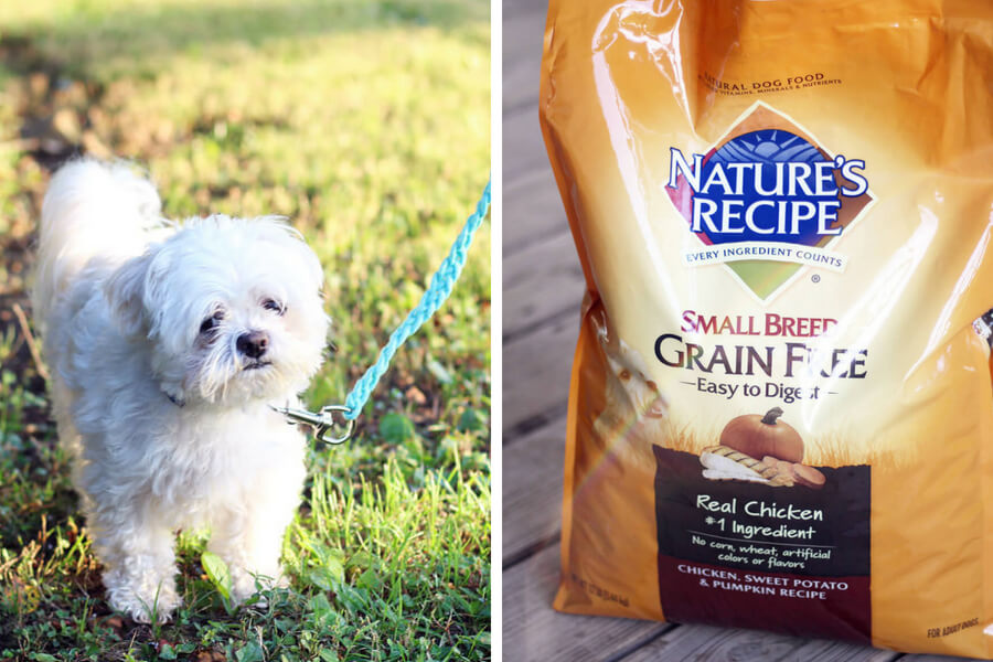 A happy white dog next to a bag of Nature's Recipe brand dog food