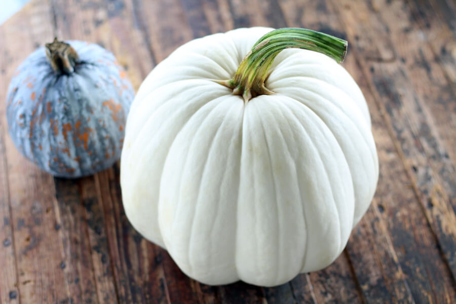 A perfect white pumpkin
